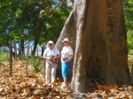 Lelice (Davis) Newcomb and AnnCherie (Kelly) Dye beside the Panama Tree.