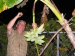 Wendell Newcomb cutting down bananas in Bobby's back yard.